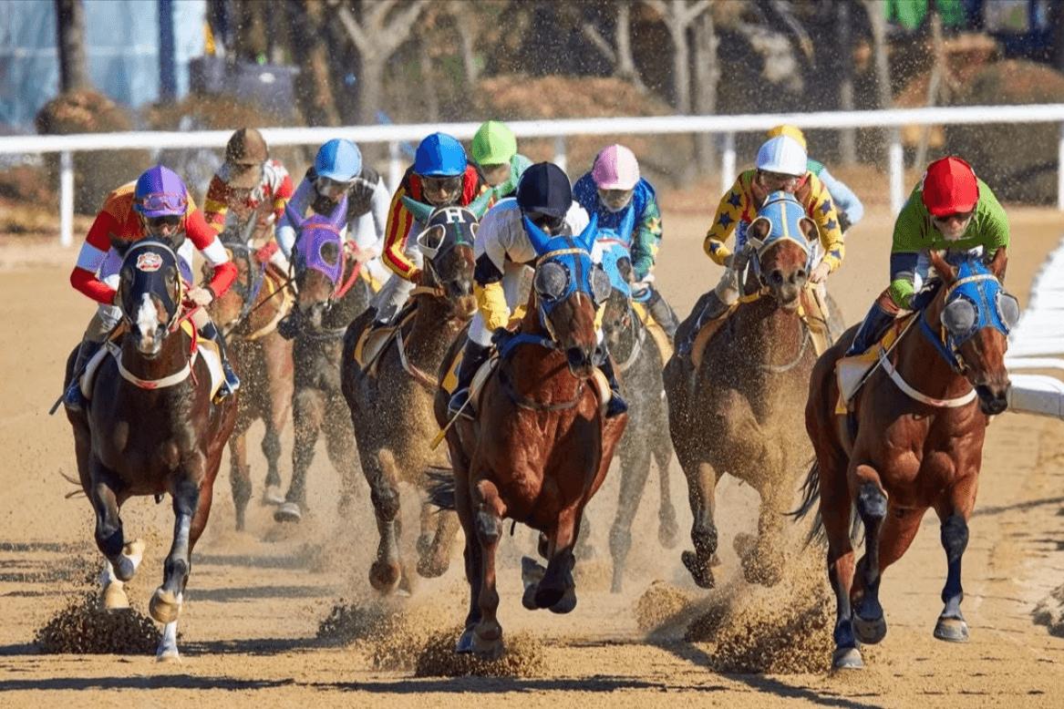 liberty horse training