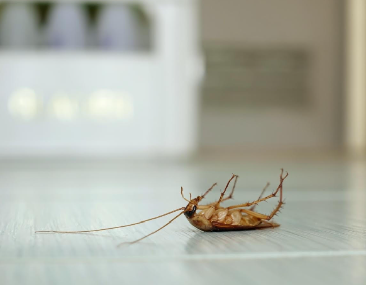 What Can Cause a Roach Infestation in Your Kitchen